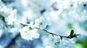 Beautiful-Nature-1