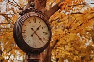 nepguild.photosheltercom