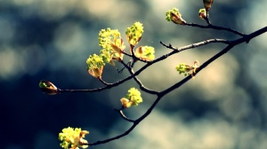 Only-Beautiful-Plants-1
