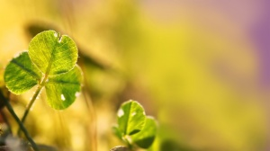 Only-Beautiful-Plants-3