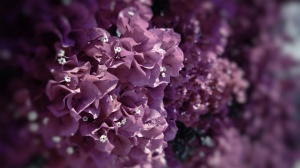 Only-Beautiful-Plants-4