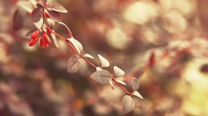 Only-Beautiful-Plants-5