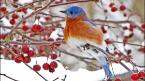 blogchatterbirdscom